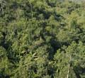 Laos Regenwald