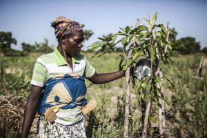 Klimarisikoversicherungen als Schutz vor Dürren?