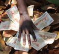 """In der Region Ukamba in Zentralkenia leben 60-80% der Bevölkerung, überwiegend Angehörige der ethnischen Gruppe der Kamba, unterhalb der Armutsgrenze. Die Kamba leiden neben den natürlichen Gegebenheiten, bedingt durch das La Nina Phänomen, unter einem Versagen der regionalen, nationalen und internationalen Entwicklungspolitik, den Folgen des Klimawandels, der Landnahme und den Konsequenzen gewaltsamer Auseinandersetzungen. Die Partnerorganisation von """"Brot für die Welt"""", die Ukamba Christian Community Services (UCCS) arbeitet als regionale Entwicklungsorganisation der Anglikanischen Kirche Kenias in den Dürregebieten im Südosten und im Zentrum des Landes, um dort die Überlebensfähigkeit der kleinbäuerlichen Strukturen und Familien zu sichern. Schwerpunkte ihrer Aktivitäten sind die Unterstützung und Qualifizierung der Bäuerinnen und Bauern in Methoden nachhaltiger Landwirtschaft in Trockengebieten, Wasserkonservierung, Boden- und Erosionsschutz sowie die angepasste Viehhaltung. Foto zeigt: Szenen mit dem kenianischen Schilling."""